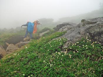 岩と花に雨DSCF4839a.jpg